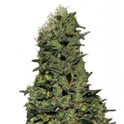 Pro Organic Grow (GO Thrive)1L