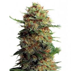 Humic (Diamond Black) 1L