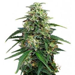 Purpinator 4L