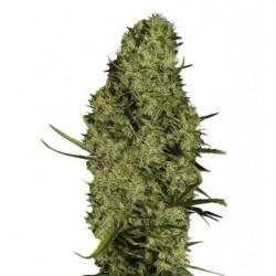 Formulex 1L