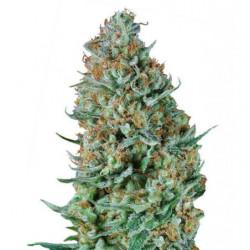 Myco Chum 32oz 704ml