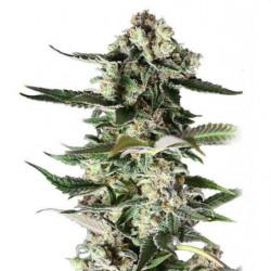 Spraymix 1L