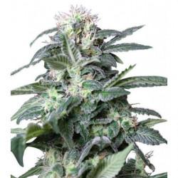 Hydro A/B 5L