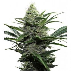 Hydro B 10L
