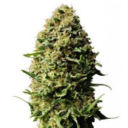Coco B 5L