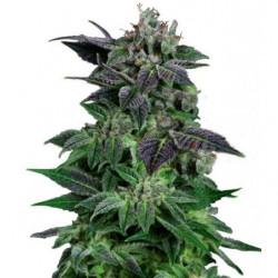 Epic Blast Coco 250ml