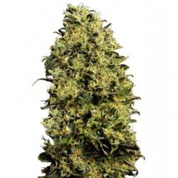 Epic Blast Coco 5L