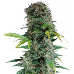 Mills Basis A 10L