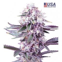 Green Sensation 10L