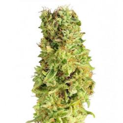 Bomba de agua Sicce SYNCRA...