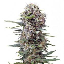 LED Cultilite Spot 15W Grow...