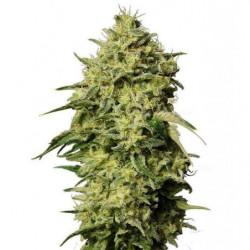 Light Hangers max 5kg
